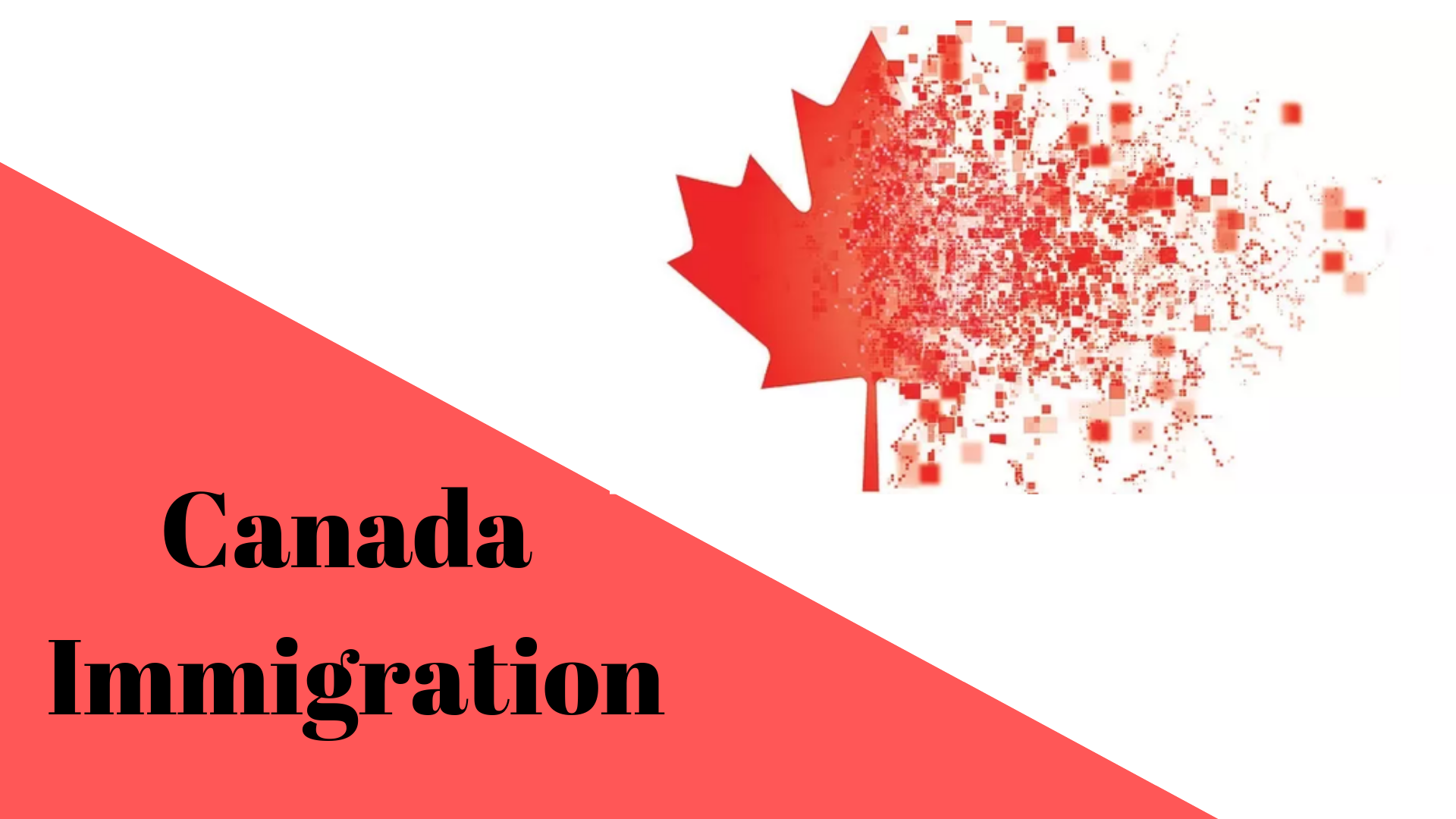 Who are the best immigration consultants for Canada?